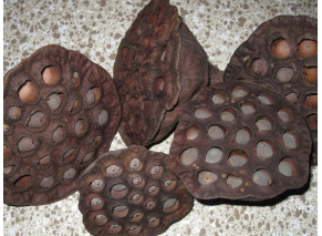 """Dried Lotus Pods"" - '100 Natural, Large'"